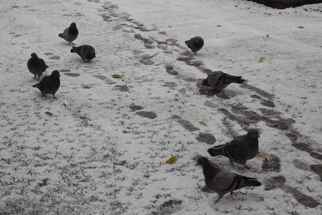 Второй первый снег в Омске